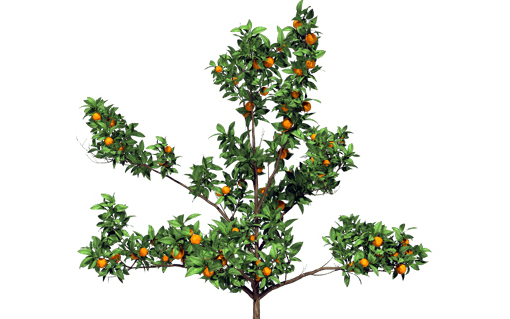 saplingtree
