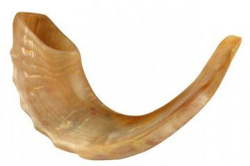 shofarmaksed