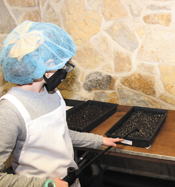 Chaya Simon sprays trays of seeded soil before putting them into 'blackout' for germination. Photo: Marshall Weiss.